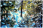 Incline Digital Art - Pine Tree Shadows in the Snow by Barbara Chichester