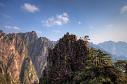 Travel China Posters - Pine trees on Huangshan Mountain China Poster by Fototrav Print