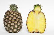 Vitamine Framed Prints - Pineapple Ananas comosus Framed Print by Matthias Hauser
