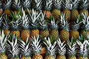 Pineapples Photos - Pineapples  by Gia Marie Houck