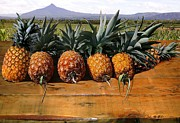 Pineapples Prints - Pineapples of Costa Rica Print by IM Spadecaller