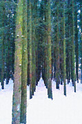 Magomed Magomedagaev - Pines in a winter forest
