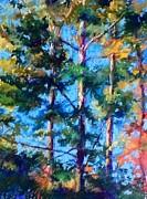 Pines Print by Kathleen R Worgul
