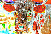 Long Horn Digital Art Posters - Pineywoods Cow Cam Poster by Miki  Finn
