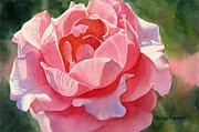 Realistic Prints - Pink and Orange Rose Blossom Print by Sharon Freeman