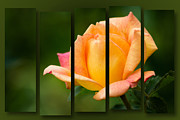 Bronx Prints - Pink and Orange Rose collage Print by Jerry Deutsch