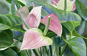 Watercolor Art Paintings - Pink Anthurium by Sharon Freeman