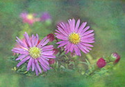 Asters Metal Prints - Pink Asters Metal Print by Angie Vogel