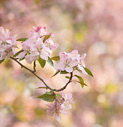 Garden Flowers Photos - Pink Blossoms by Kim Hojnacki