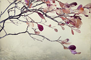 Twig Photos - Pink Blueberry Leaves by Priska Wettstein