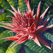 Sunlight Paintings - Pink Bromeliad - Closeup by Janis Grau