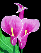 Flowers Mixed Media Posters - Pink Calla Lillies 2 Poster by Angelina Vick