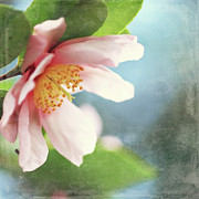 Camellia Photo Metal Prints - Pink Camellia Metal Print by Sylvia Cook