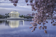 Reflections In River Prints - Pink cherry blossoms frame the Jefferson Memorial on the Tidal Basin 27 Print by Mark Serfass
