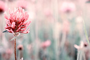 Good Luck Metal Prints - Pink Clover Flower Metal Print by Sabine Jacobs