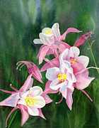 White Blossoms Paintings - Pink Columbine Blossoms by Sharon Freeman