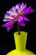 Dahlias Photos - Pink Dahlia in yellow vase by Garry Gay