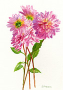 Watercolours Posters - Pink Dahlias Poster by Sharon Freeman