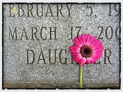 Daisy Framed Prints - Pink Daisy on Grave for Daughter Framed Print by Amy Cicconi