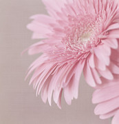 Textured Floral Prints - Pink Delight Print by Kim Hojnacki