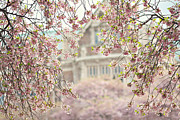 Cherry Blossoms Photos - Pink Dream by Sylvia Cook