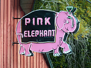 James Tanforan - Pink Elephant