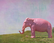 Elephant Wall Art Framed Prints - Pink Elephant Framed Print by Kay Pickens