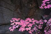 Pink Fall Colors In Sedona Arizona Print by Dave Dilli