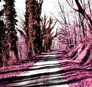 Amy Sorrell - Pink Filled Drive
