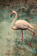 Claudia Moeckel - Pink Flamingo