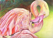 Flamingo Drawings - Pink Flamingo by Celia Fedak