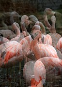 Multiple Exposures Posters - Pink Flamingo Fantasy Poster by Rick Rauzi