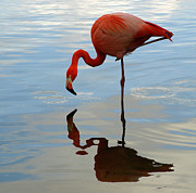 Raymond Earley - Pink Flamingo