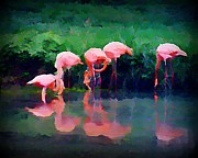 Reflections In Water Posters - Pink Flamingos Poster by John Malone