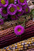Corns Photos - Pink flower and corn by Garry Gay