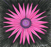 Daisies Drawings Prints - Pink Flower in Black Print by Nina Kuriloff