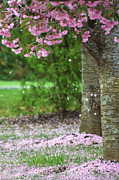 Blooming Tree Posters - Pink Flowering Tree Poster by Adspice Studios