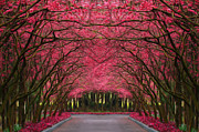 Martin Dzurjanik Framed Prints - Pink Forest Way Framed Print by Martin Dzurjanik