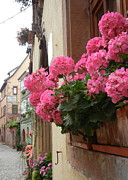Alsace Framed Prints - Pink Geraniums in Alsacian Village Framed Print by Lilian Norris