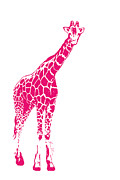Beauty Balance Design - Pink Giraffe