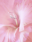 Flower Gardens Photos - Pink Gladiolus Flower by Jennie Marie Schell