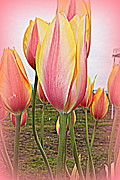 Tulips Prints - Pink Print by Helen Fern