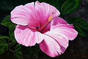 Pink Hibiscus Print by Lyndsey Hatchwell