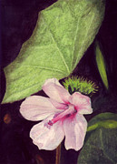Render Originals - Pink Hibiscus by Mukta Gupta