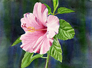Tropical Art Paintings - Pink Hibiscus with Dark Background by Sharon Freeman
