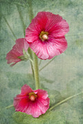 Hollyhocks Prints - Pink Hollyhocks Print by Lena Auxier