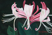 Fuschia Pastels Posters - Pink Honeysuckle Poster by Angela Bruskotter