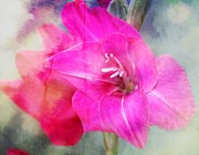 Gladiolas Digital Art Prints - Pink in the Clouds Print by Cathie Tyler