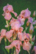 Beautiful Creek Mixed Media Prints - Pink Iris Family Print by Omaste Witkowski