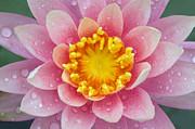 Pink Print by Karen Walzer